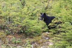 2012-09-26  Bear 023 - Copy
